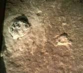 Hình ảnh phóng lớn của dấu vết giày với một Tam diệp trùng ở góc trên bên trái (Ảnh được đăng với sự cho phép của bảo tàng Creation Evidence)